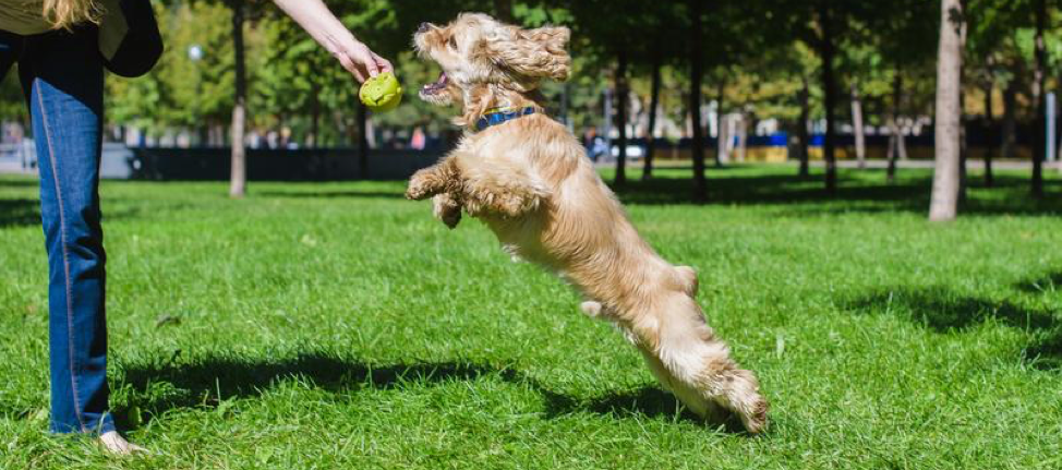 11 Fun Facts About Dogs