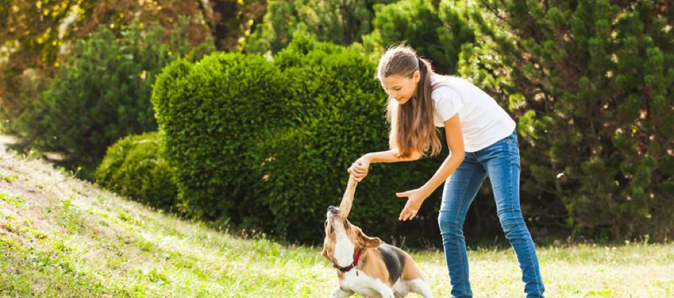 Tips For Creating A Pet-Friendly Yard