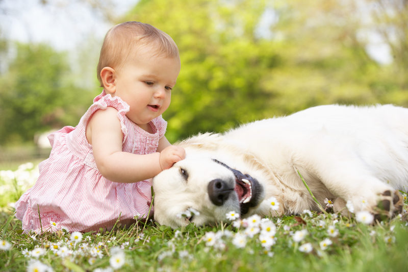 A Guide for Introducing Your New Baby to Your Canine Companion