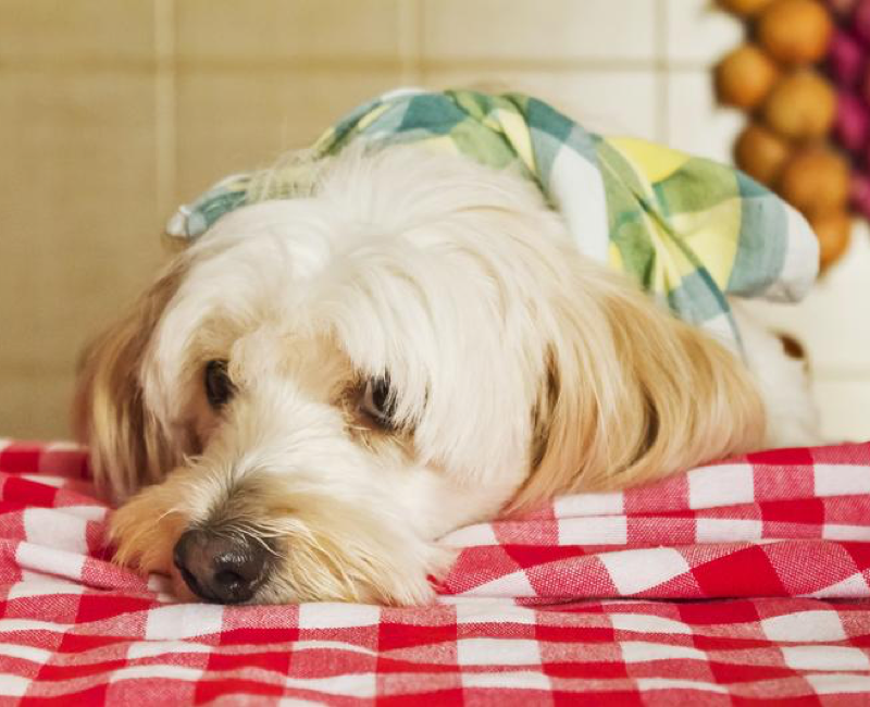 Read This Before You Sneak Your Pup That Snack!