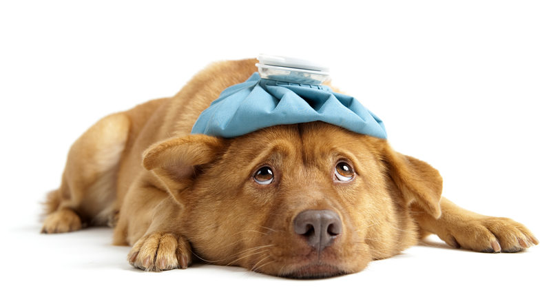 How to Cope with Unexpected Vet Bills