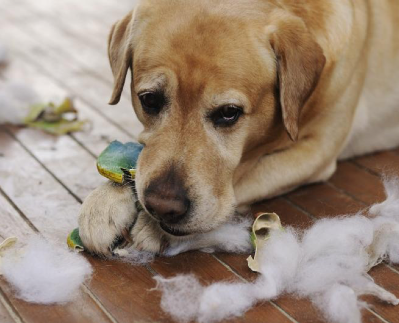 Spring Cleaning Tips for Pet Lovers