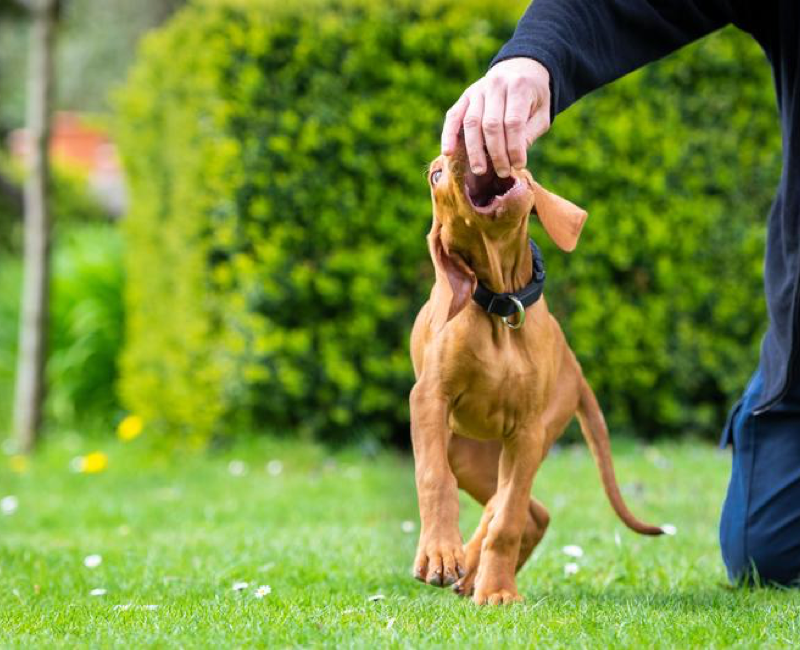 Mouthing, Nipping, and Biting in Pet Dogs: What's Normal & What's Not