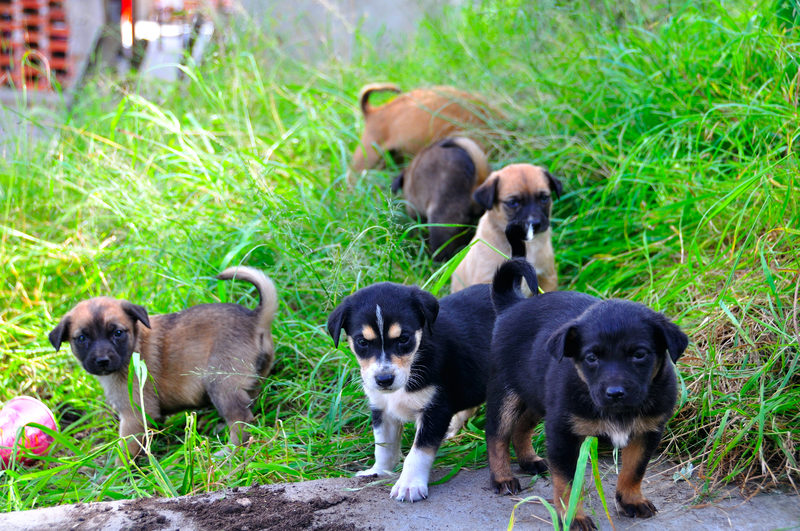 Take Me Home: How to Prepare to Adopt a Puppy