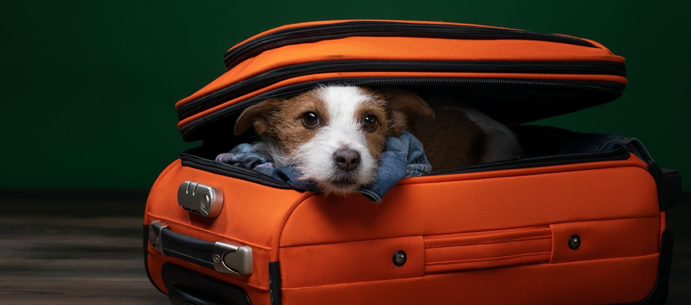 Tips for Safe and Easy Holiday Traveling With Your Dog