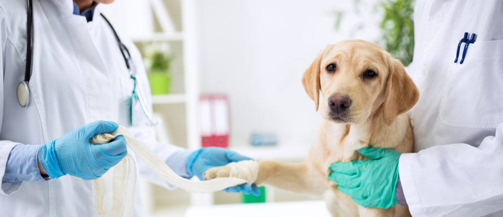 Health Issues That Can Affect Both You and Your Dog